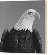 Eagle On Watch Black And White Wood Print