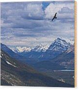 Eagle Over Peyto Lake Wood Print