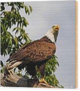 Eagle Portrait IIi Wood Print