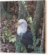 Eagle Pose Wood Print