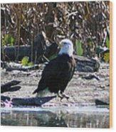 Eagle Posing By Water Wood Print