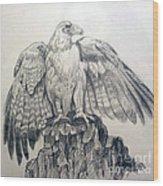 Eagle Sketch Wood Print