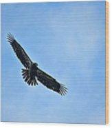 Eagle Soaring Wood Print