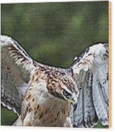 Eagle Wings Wood Print