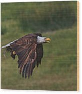 Eagle With Prey Wood Print