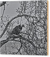 Eagles Along The Mississippi 2 Wood Print