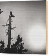 Eagles And Old Tree In Sunset Silhouette Wood Print