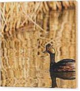 Eared Grebe  Wood Print