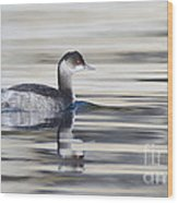 Eared Grebe Wood Print