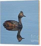 Eared Grebe Podiceps Nigricollis Wood Print