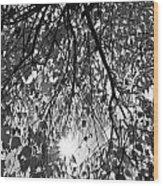 Early Autumn Monochrome Wood Print