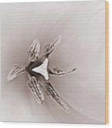 Early Blooming Tulip Wood Print
