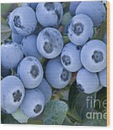 Early Blue Blueberries Wood Print
