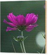 Early Dawns Light On Fall Flowers 03 Wood Print