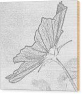 Early Dawns Light On Fall Flowers Bw Wood Print