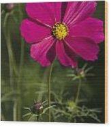 Early Dawns Light On Fall Flowers V 03 Wood Print