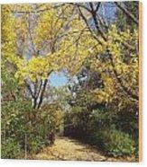 Early Fall 1 Wood Print