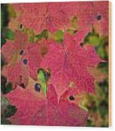 Early Fall Of Norway Maple Wood Print
