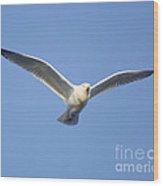 Early Glider Wood Print