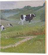 Early Morning Holsteins Wood Print