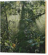 Early Morning Light In The Rain Forest Wood Print