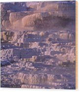 Early Morning Light On Minerva Springs Yellowstone National Park Wood Print