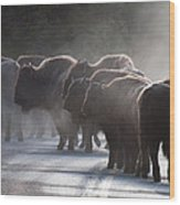 Early Morning Road Bison Wood Print