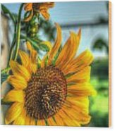Early Morning Sunflower Wood Print