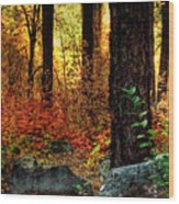 Early Morning Walk Wood Print