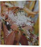Early Snow On Rhododendron Wood Print