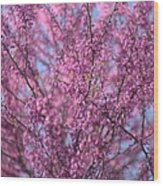 Early Spring Flowering Redbud Tree Wood Print