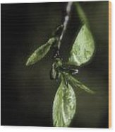 Early Spring Leaves Wood Print