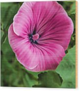Early Summer Blooms Impressions - Bright Pink Malva - Vertical View Wood Print