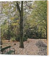 Earth Day Special - Bench In The Park Wood Print
