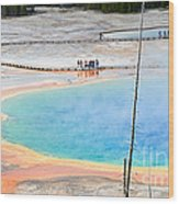 Earth Rainbow - Overhead View Of Grand Prismatic Spring In Yellowstone National Park.  Wood Print