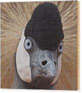 East African Crowned Crane 6 Wood Print