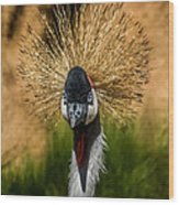 East African Crowned Crane Square Format Wood Print