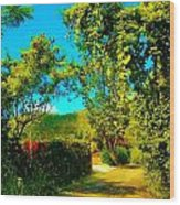 East End St. John's Usvi Wood Print