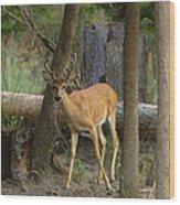 East Texas Whitetail  Wood Print