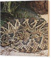 Easter Diamond Back Rattlesnake Wood Print