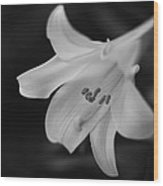 Easter Lily 2013 Wood Print