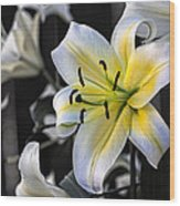 Easter Lily On Black Wood Print