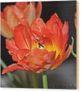 Easter Parrot Tulips Wood Print
