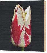 Easter Greetings - Twinkle Tulip Wood Print
