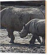 Eastern Black Rhinos Mama N Baby Wood Print
