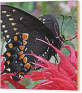 Eastern Black Swallowtail And Bee Balm Wood Print