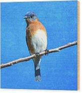 Eastern Bluebird II Wood Print