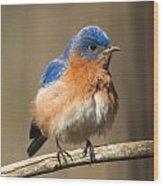Eastern Bluebird Male Ruffled Wood Print