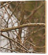 Eastern Bluebird Pair Wood Print