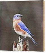 Eastern Bluebird - The Old Fence Post Wood Print